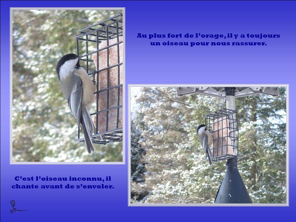 Au plus fort de lorage, il y a toujours un oiseau pour nous rassurer.