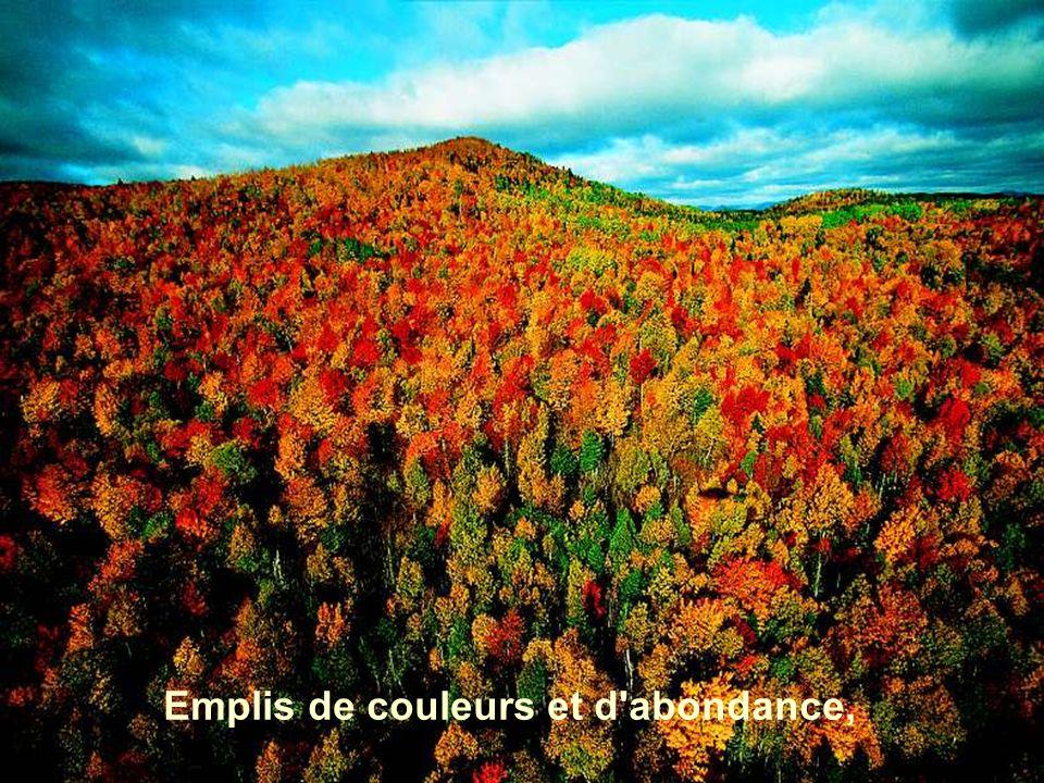 Emplis de couleurs et d'abondance,