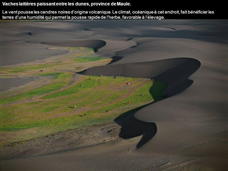 Lac salé de Maricunga, Chili. Le Lac nest pas totalement desséché. Ses étangs couleur émeraude, reliés aux grandes lagunes voisines, restent un paradi
