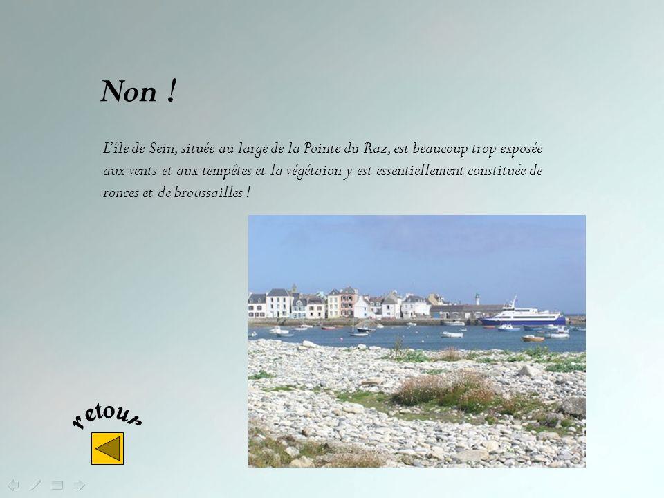 Non ! Lîle de Batz, au nord du Finistère, au large de Roscoff, bénéficie dun climat exceptionnellement doux qui permet, outre les cultures maraîchères
