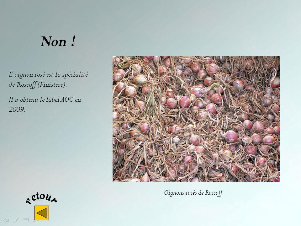 Oui ! Plougastel-Daoulas – sur la rade de Brest – est célèbre pour ses fraises dont la culture constitue la base essentielle de son économie. Ramassag