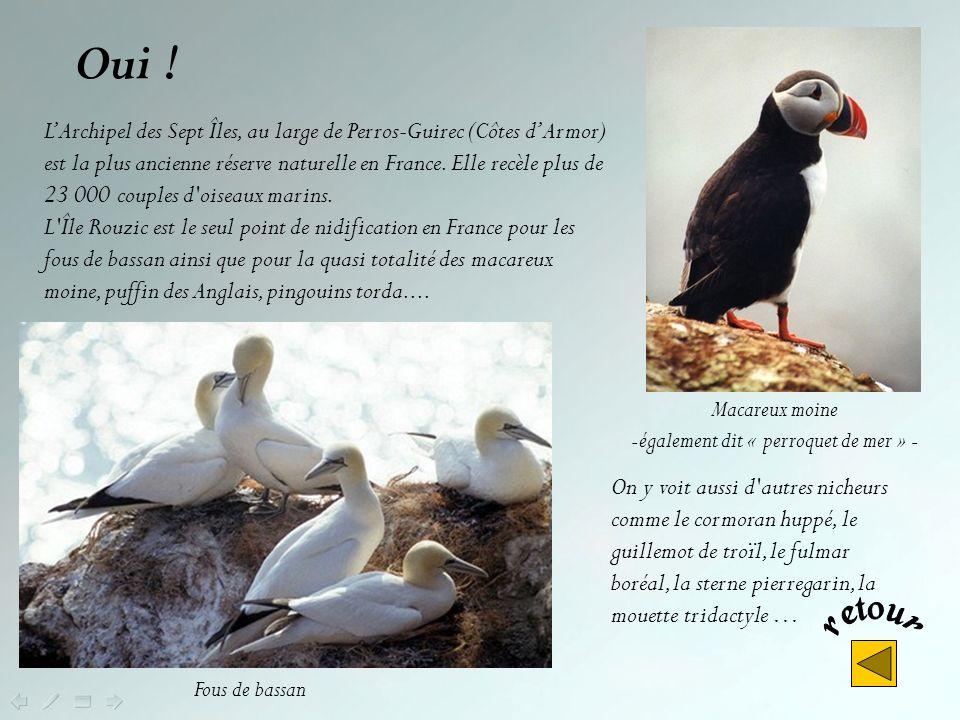 Réserve ornithologique, plus important site de France pour lobservation des oiseaux de mer, cest: Les 7 Îles Pont-Scorff Branféré