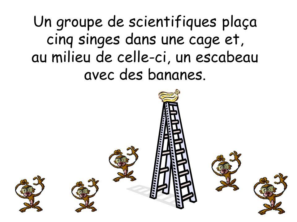 Un groupe de scientifiques plaça cinq singes dans une cage et, au milieu de celle-ci, un escabeau avec des bananes.