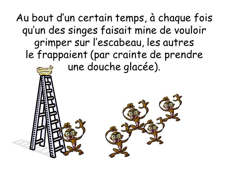À chaque fois quun des singes tentait de grimper à lescabeau, une douche glacée aspergeait automatiquement les autres.