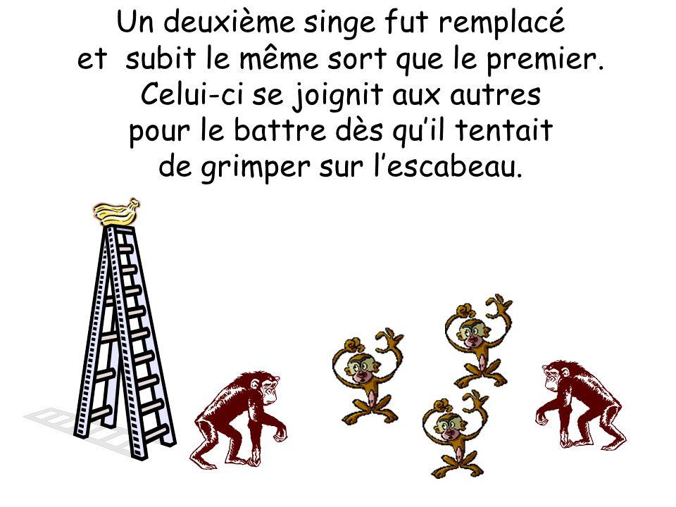 Un deuxième singe fut remplacé et subit le même sort que le premier.