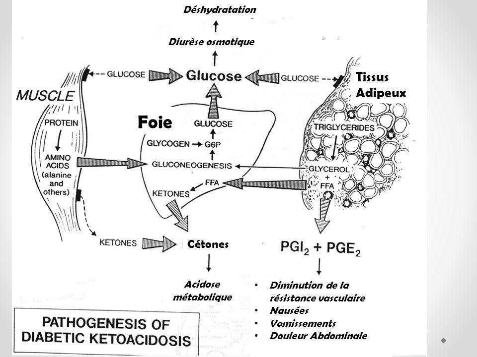 Foie Tissus Adipeux Diurèse osmotique Déshydratation Diminution de la résistance vasculaire Nausées Vomissements Douleur Abdominale Acidose métabolique Cétones