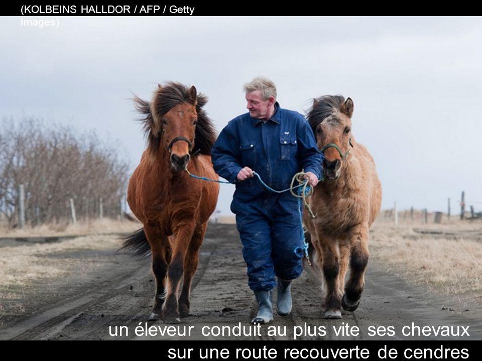 …et lutter pour sauver les chevaux, près de Sulfoss (REUTERS / Lucas Jackson)