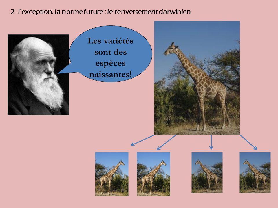 2- lexception, la norme future : le renversement darwinien Les variétés sont des espèces naissantes!