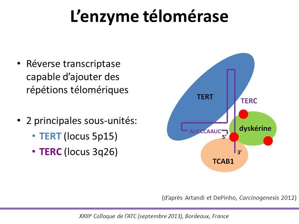 XXIII e Colloque de lATC (septembre 2013), Bordeaux, France Réverse transcriptase capable dajouter des répétions télomériques 2 principales sous-unité
