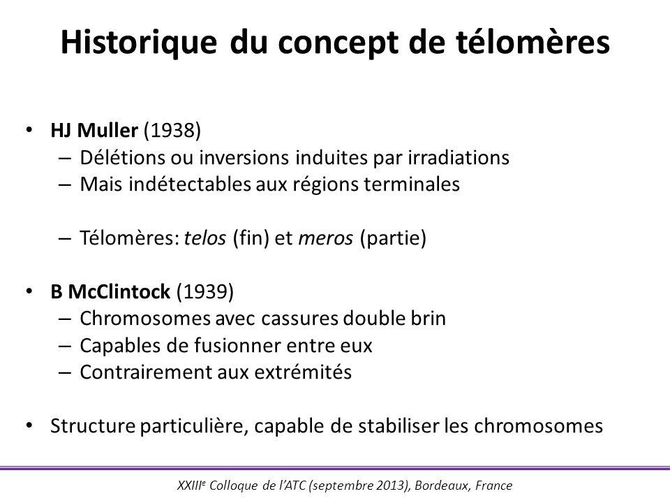 XXIII e Colloque de lATC (septembre 2013), Bordeaux, France Les télomères - structure Structures nucléoprotéiques à lextrémité des chromosomes Séquences répétitives « TTAGGG » (structure bien conservée) + complexe shelterin Structure double brin et simple brin terminale (~100 nucléotides) « Boucle T » et « boucle D » Longueur télomérique ~10 kb (daprès Stewart et al., Mutat Res 2012)