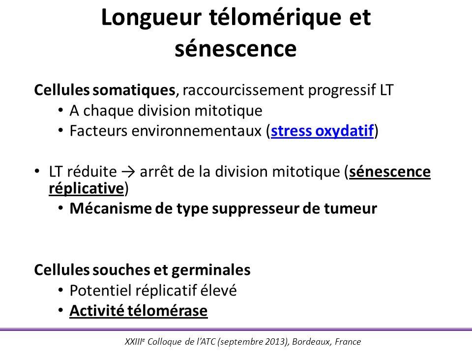XXIII e Colloque de lATC (septembre 2013), Bordeaux, France Nombre de copies du locus portant hTERC .