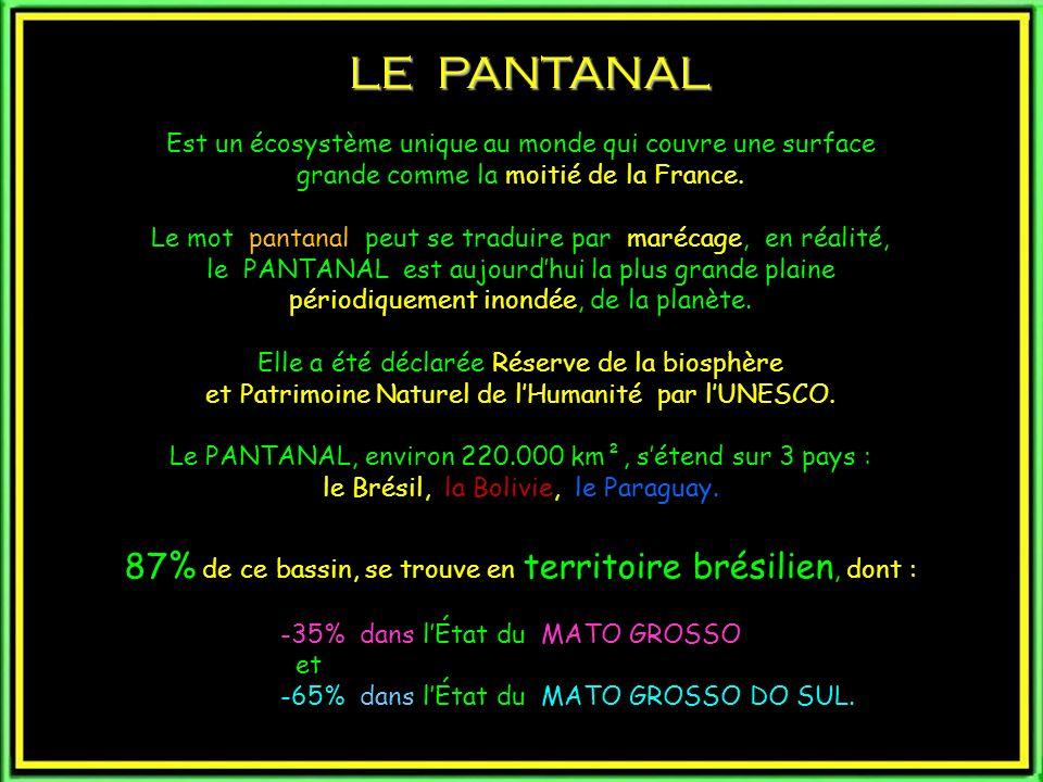 LE PANTANAL Est un écosystème unique au monde qui couvre une surface grande comme la moitié de la France.