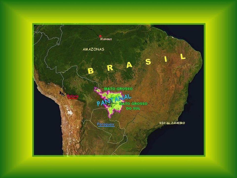 LE PANTANAL Est un écosystème unique au monde qui couvre une surface grande comme la moitié de la France. Le mot pantanal peut se traduire par marécag