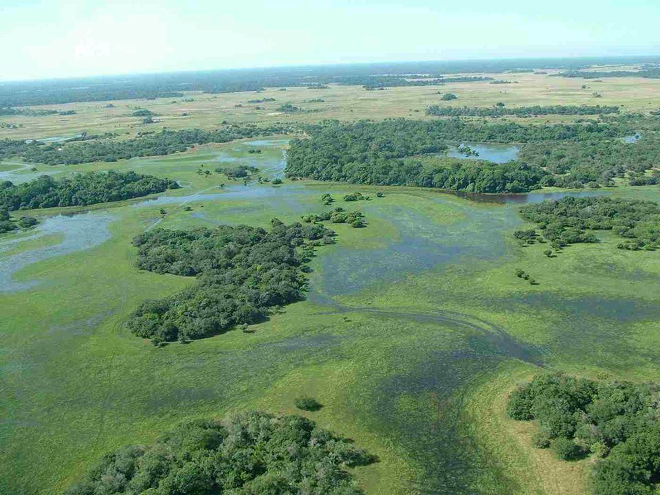 Venant des hauts plateaux, les rivières sécoulent dans le PANTANAL jusquau rio Paraguay, qui lui, descend vers le sud. Les crues nont pas lieu brusque