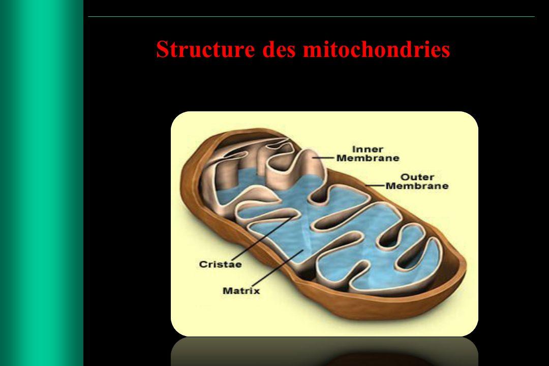 LES INVESTIGATIONS BIOCHIMIQUES LACTATE and PYRUVATE ( blood, CSF ) Lactate/pyruvate (molaire)> 25 en cas danomalies de la CR Lactate/pyruvate (molaire)< 25 déficit en PDH ENZYMES ACTIVITIES (C I, C II,C III, etc.) POLAROGRAPHY