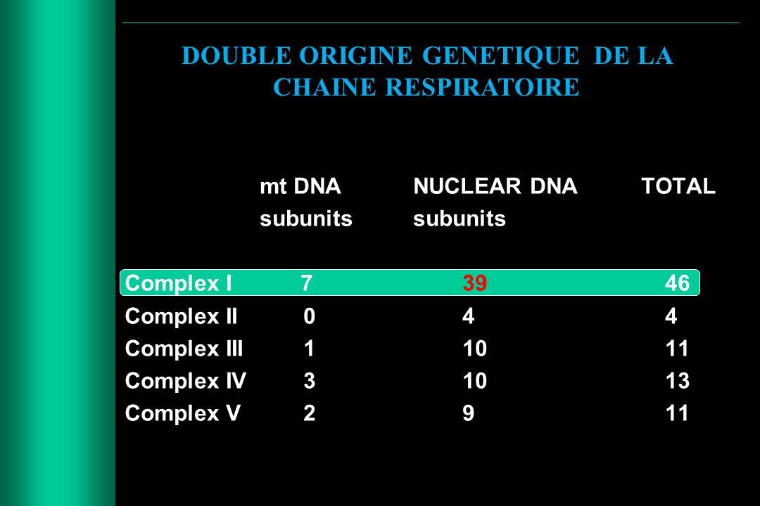 DOUBLE ORIGINE GENETIQUE DE LA CHAINE RESPIRATOIRE mt DNA NUCLEAR DNA TOTAL subunits Complex I 73946 Complex II 044 Complex III 11011 Complex IV 31013