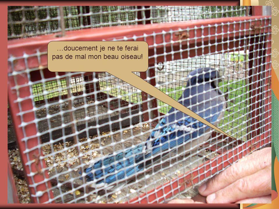 Cages pour les plus gros oiseaux.
