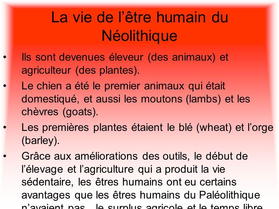 La vie de lêtre humain du Néolithique Ils sont devenues éleveur (des animaux) et agriculteur (des plantes). Le chien a été le premier animaux qui étai