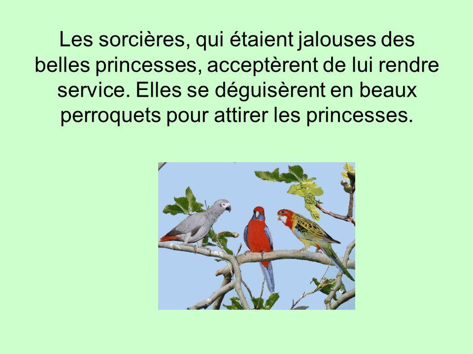 Les sorcières, qui étaient jalouses des belles princesses, acceptèrent de lui rendre service. Elles se déguisèrent en beaux perroquets pour attirer le