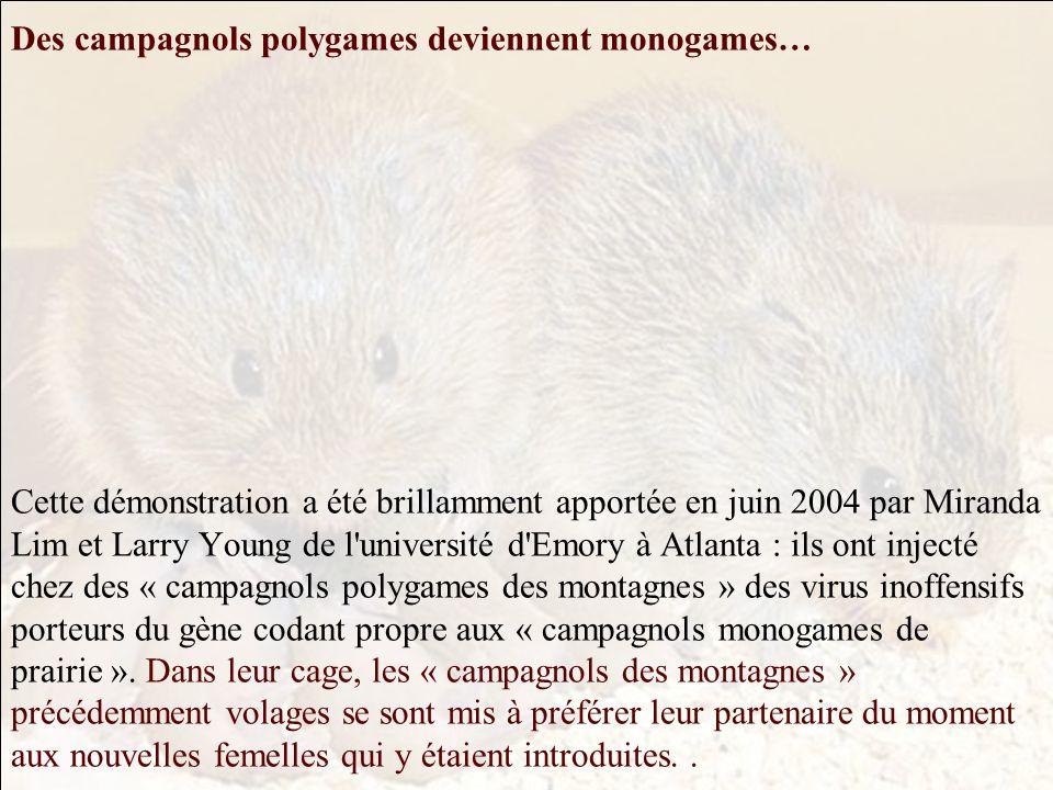 Le comportement social et parental inné monogame ou polygame des « campagnols des prairies (Microtus ochrogaster) » et des « campagnols des montagnes