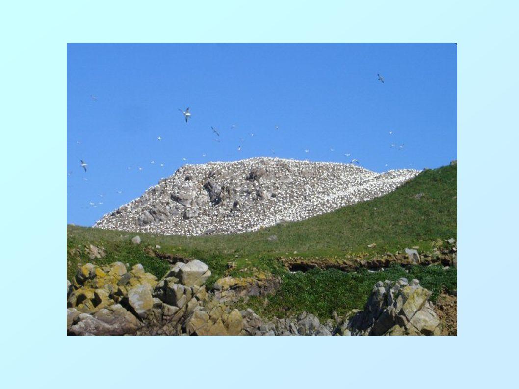 L'archipel des 7 îles (ar Jentilez ) Au large de Perros Guirec, une réserve ornithologique composée de 7 îles.