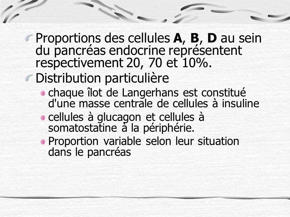 Proportions des cellules A, B, D au sein du pancréas endocrine représentent respectivement 20, 70 et 10%.