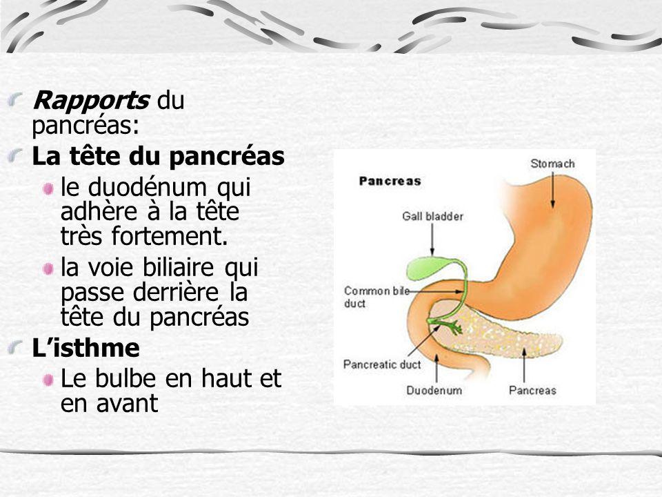 Rapports du pancréas: La tête du pancréas le duodénum qui adhère à la tête très fortement.