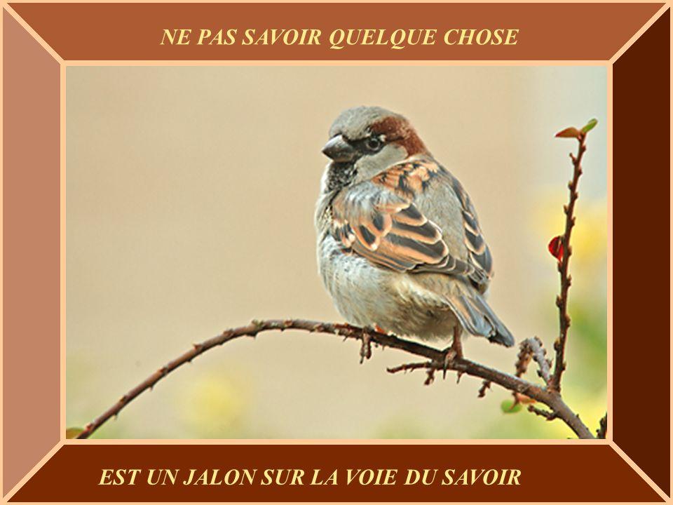 La vie doit être vécue avec amour et humour, Lamour pour comprendre, et lhumour pour endurer