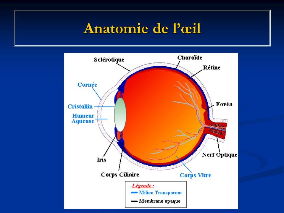 Anatomie de lœil