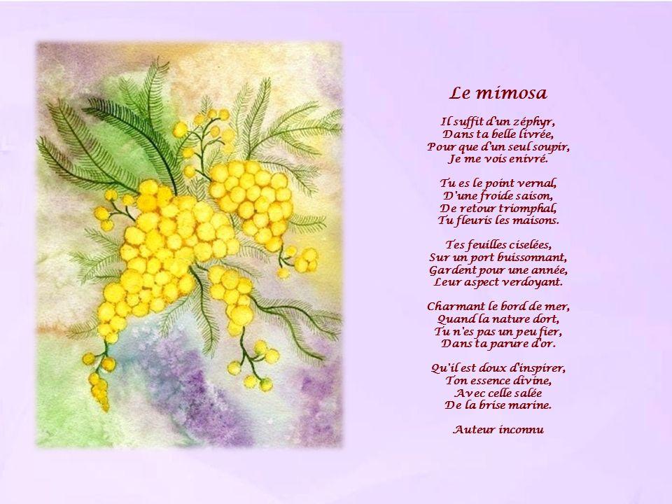 Le mimosa Il suffit d'un zéphyr, Dans ta belle livrée, Pour que d'un seul soupir, Je me vois enivré. Tu es le point vernal, D'une froide saison, De re