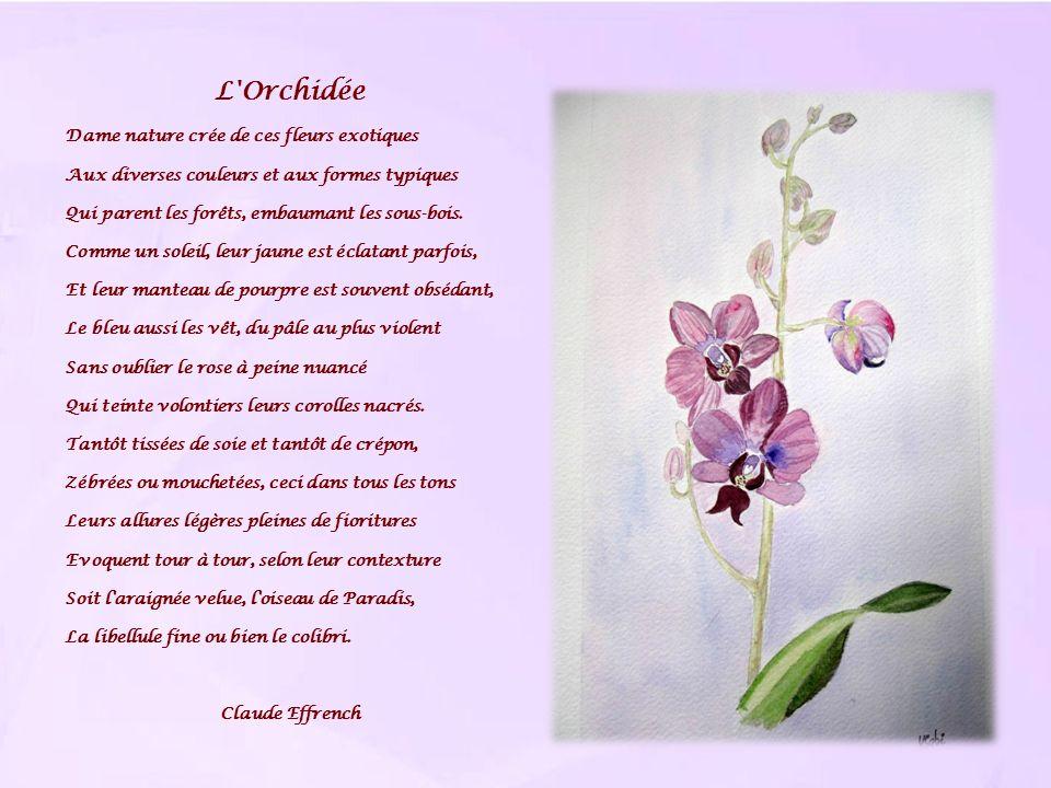 L'Orchidée Dame nature crée de ces fleurs exotiques Aux diverses couleurs et aux formes typiques Qui parent les forêts, embaumant les sous-bois. Comme