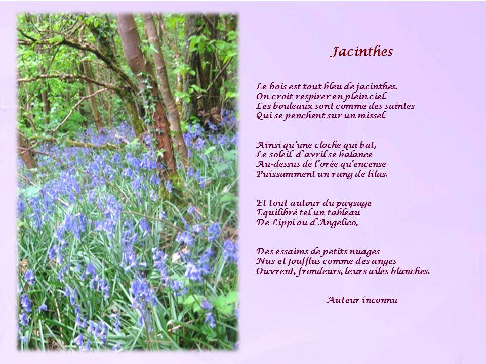 Jacinthes Le bois est tout bleu de jacinthes. On croit respirer en plein ciel. Les bouleaux sont comme des saintes Qui se penchent sur un missel. Ains