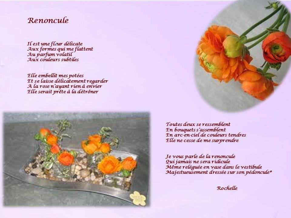 Renoncule Il est une fleur délicate Aux formes qui me flattent Au parfum volatil Aux couleurs subtiles Elle embellit mes potées Et se laisse délicatem