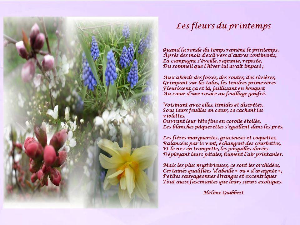 Les fleurs du printemps Quand la ronde du temps ramène le printemps, Après des mois dexil vers dautres continents, La campagne séveille, rajeunie, rep