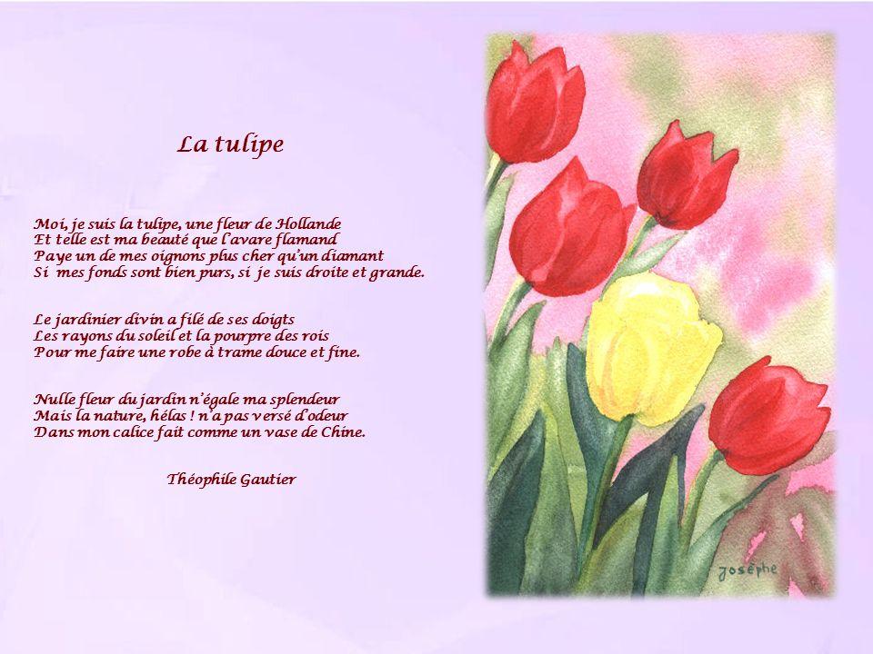 La tulipe Moi, je suis la tulipe, une fleur de Hollande Et telle est ma beauté que lavare flamand Paye un de mes oignons plus cher quun diamant Si mes