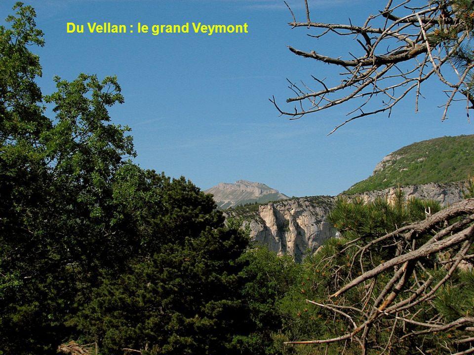 Du Vellan : le grand Veymont