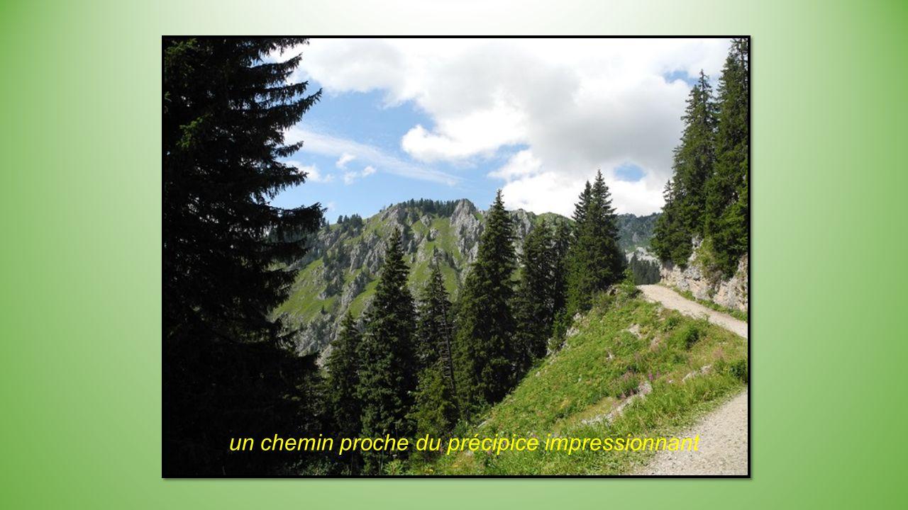 Succession de paysages entre forêts et sommets, en direction du lac.