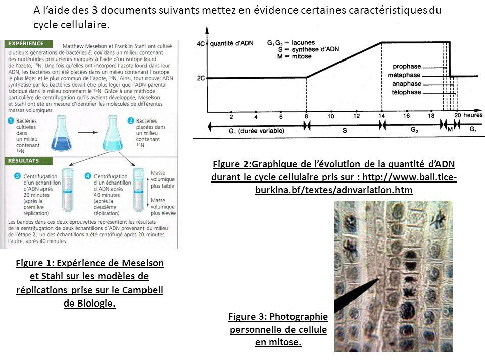 A laide des 3 documents suivants mettez en évidence certaines caractéristiques du cycle cellulaire. Figure 1: Expérience de Meselson et Stahl sur les