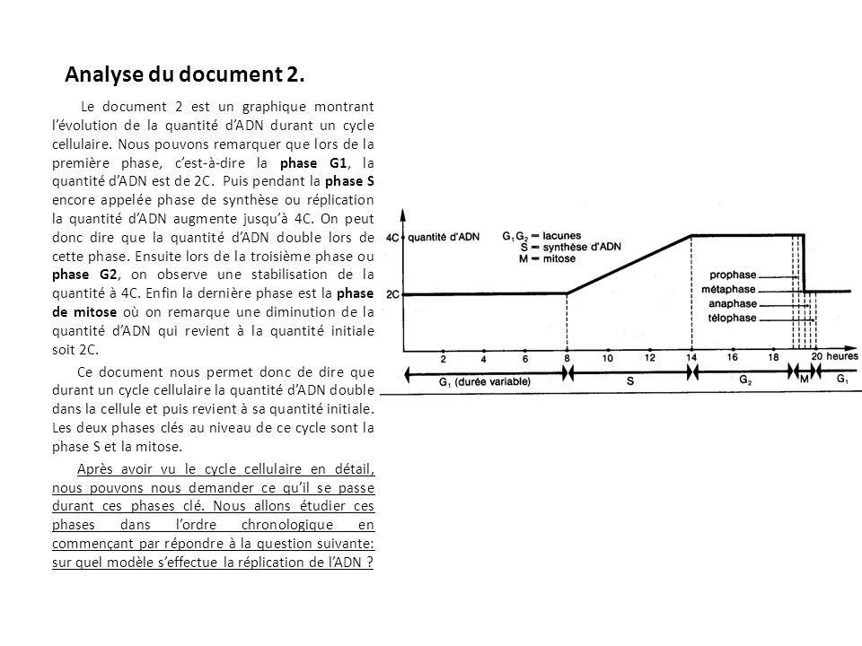 Analyse du document 2. Le document 2 est un graphique montrant lévolution de la quantité dADN durant un cycle cellulaire. Nous pouvons remarquer que l