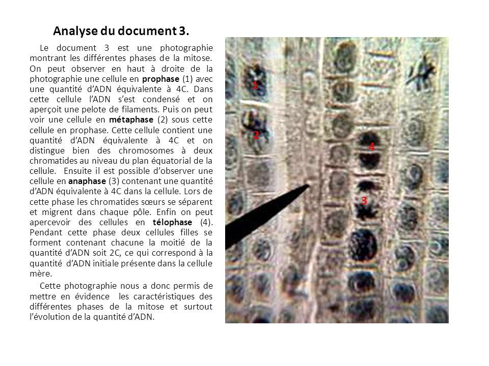 Analyse du document 3. Le document 3 est une photographie montrant les différentes phases de la mitose. On peut observer en haut à droite de la photog