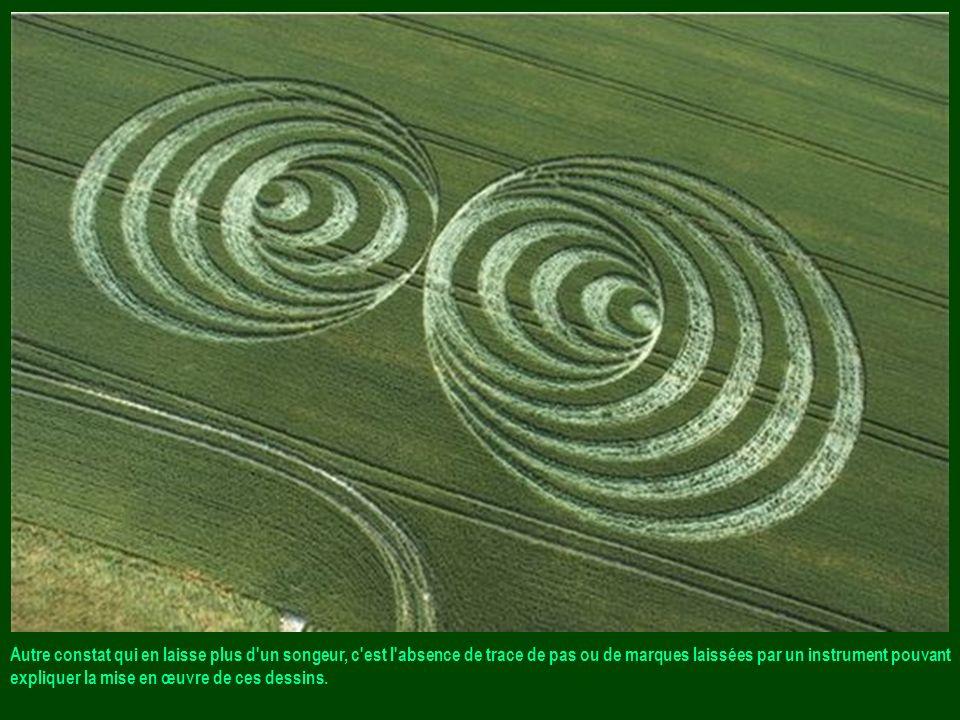 Les premières observations faites sur le terrain laissent perplexes car les tiges des céréales ne sont en aucun cas coupées mais tordues en spirale, d