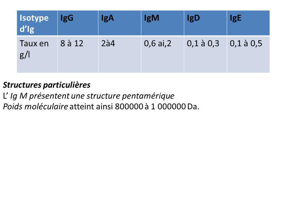 Isotype dIg IgGIgAIgMIgDIgE Taux en g/l 8 à 122à40,6 ai,20,1 à 0,30,1 à 0,5 Structures particulières L Ig M présentent une structure pentamérique Poids moléculaire atteint ainsi 800000 à 1 000000 Da.