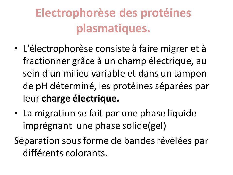 Electrophorèse des protéines plasmatiques. L'électrophorèse consiste à faire migrer et à fractionner grâce à un champ électrique, au sein d'un milieu