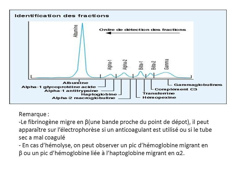 Remarque : -Le fibrinogène migre en β(une bande proche du point de dépot), il peut apparaître sur lélectrophorèse si un anticoagulant est utilisé ou si le tube sec a mal coagulé - En cas dhémolyse, on peut observer un pic dhémoglobine migrant en β ou un pic dhémoglobine liée à lhaptoglobine migrant en α2.