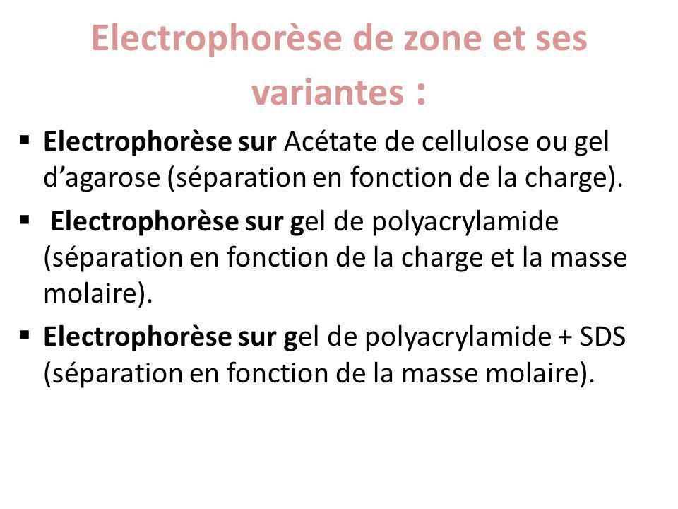 Electrophorèse de zone et ses variantes : Electrophorèse sur Acétate de cellulose ou gel dagarose (séparation en fonction de la charge). Electrophorès