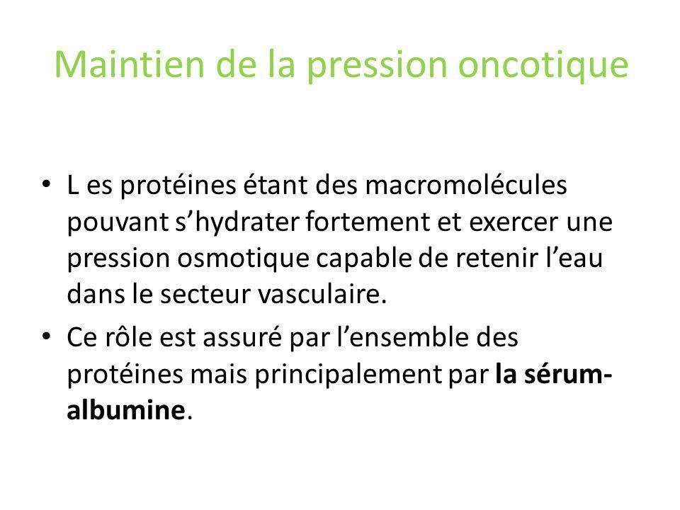 Maintien de la pression oncotique L es protéines étant des macromolécules pouvant shydrater fortement et exercer une pression osmotique capable de retenir leau dans le secteur vasculaire.
