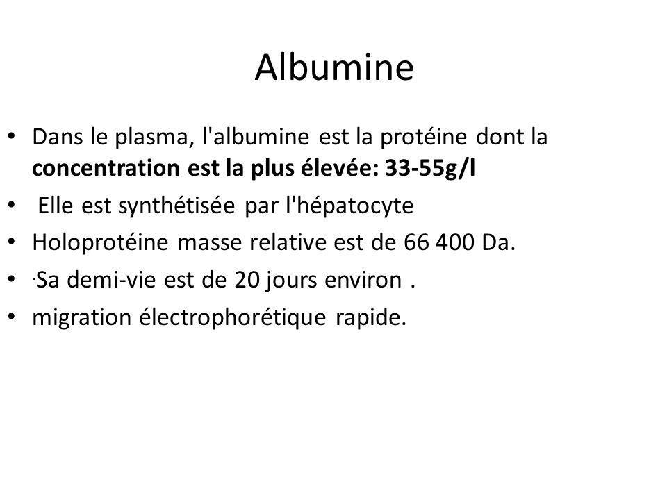 Albumine Dans le plasma, l albumine est la protéine dont la concentration est la plus élevée: 33-55g/l Elle est synthétisée par l hépatocyte Holoprotéine masse relative est de 66 400 Da..