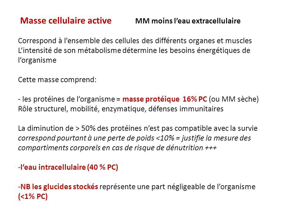 Masse cellulaire active MM moins leau extracellulaire Correspond à lensemble des cellules des différents organes et muscles Lintensité de son métabolisme détermine les besoins énergétiques de lorganisme Cette masse comprend: - les protéines de lorganisme = masse protéique 16% PC (ou MM sèche) Rôle structurel, mobilité, enzymatique, défenses immunitaires La diminution de > 50% des protéines nest pas compatible avec la survie correspond pourtant à une perte de poids <10% = justifie la mesure des compartiments corporels en cas de risque de dénutrition +++ -leau intracellulaire (40 % PC) -NB les glucides stockés représente une part négligeable de lorganisme (<1% PC)
