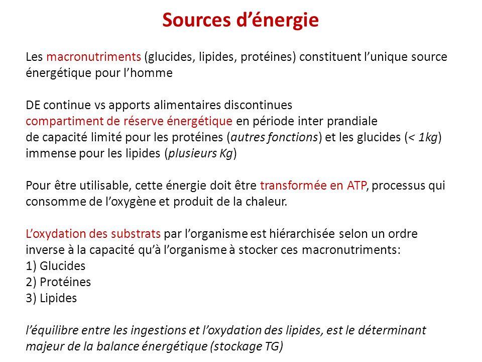 Sources dénergie Les macronutriments (glucides, lipides, protéines) constituent lunique source énergétique pour lhomme DE continue vs apports alimentaires discontinues compartiment de réserve énergétique en période inter prandiale de capacité limité pour les protéines (autres fonctions) et les glucides (< 1kg) immense pour les lipides (plusieurs Kg) Pour être utilisable, cette énergie doit être transformée en ATP, processus qui consomme de loxygène et produit de la chaleur.