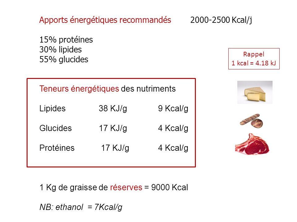 Apports énergétiques recommandés 2000-2500 Kcal/j 15% protéines 30% lipides 55% glucides Teneurs énergétiques des nutriments Lipides38 KJ/g9 Kcal/g Glucides17 KJ/g4 Kcal/g Protéines 17 KJ/g4 Kcal/g 1 Kg de graisse de réserves = 9000 Kcal NB: ethanol = 7Kcal/g Rappel 1 kcal = 4.18 kJ